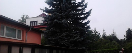 Smrk, Praha: Rizikové kácení