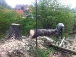rizikove-kaceni-stromu-briza-zatec-nova-ves