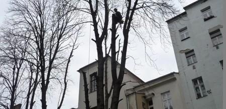 Jírovec, Praha: Rizikové kácení
