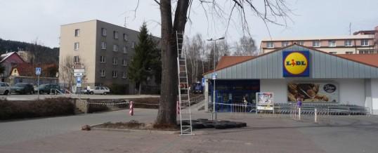 Lípa, Prachatice: Rizikové kácení