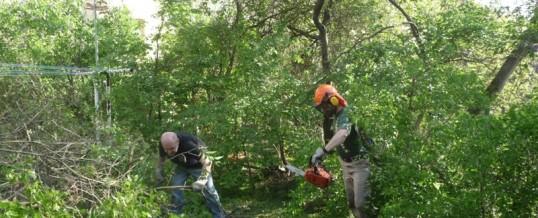 Zahrada SVJ, Praha: Kácení stromů a mýcení křovin