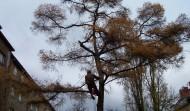 3 stromy, Praha: Rizikové kácení
