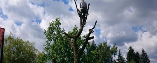 Třešeň, středočeský kraj: kácení a zpracování dřeva