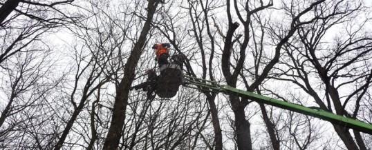 Obora Hvězda, Praha: Prořez stromů